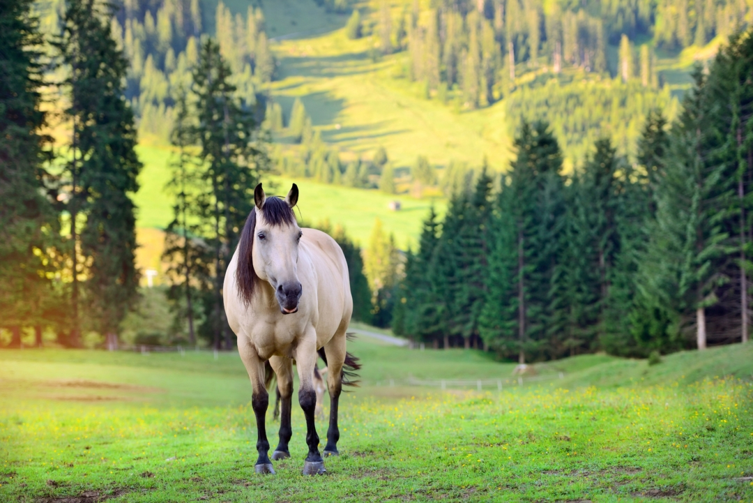 horse-on-the-meadow-in-the-mountains-PP3ANFN